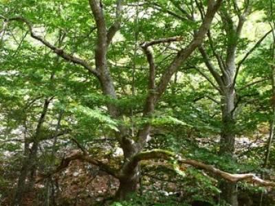Cañones y nacimento del Ebro - Monte Hijedo;ruta bola del mundo;bosques en madrid